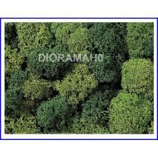08610 NOCH - Muschio lichene bicolore